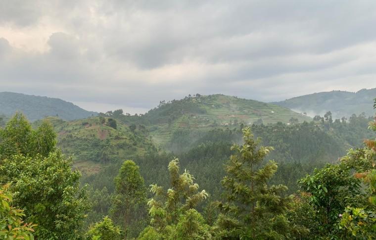 The green hills of Bwindi National Park