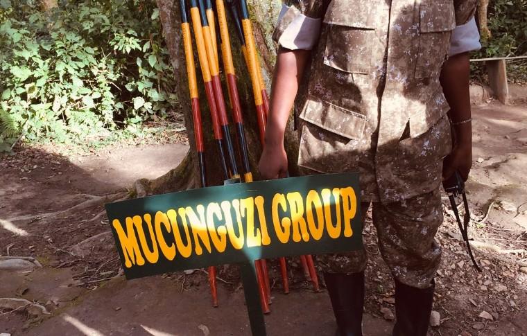 Trekking poles used for the Uganda gorilla trek