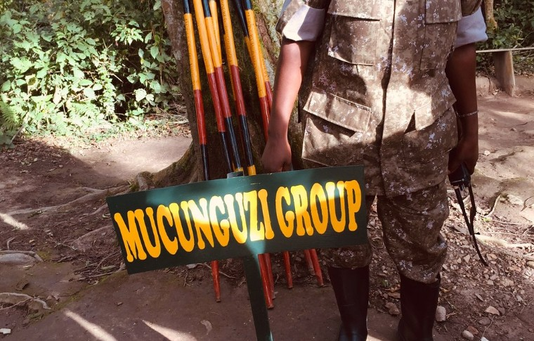 Trekking poles used for the Uganda gorilla trek