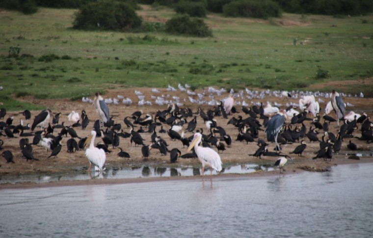 Different species of birds gather along the shore of the river.